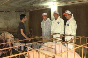 FAO: Cần cảnh giác cao độ với dịch tả lợn châu Phi tại Việt Nam