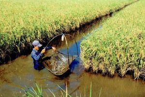 Triển khai 42 đề tài cấp quốc gia về biến đổi khí hậu và quản lý tài nguyên môi trường