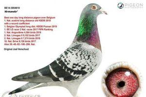 Chú chim đắt nhất thế giới