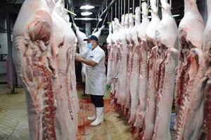Dịch tả lợn châu Phi bùng phát, cắt khẩu phần, tẩy chay.. là không nên