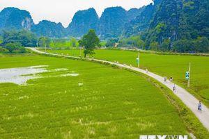 Mê mẩn ngắm danh thắng Tam Cốc trong mùa lúa xanh ngát