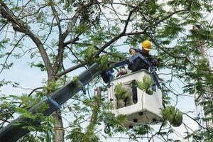 TP. Hồ Chí Minh: Tăng cường phòng chống thiên tai và tìm kiếm cứu nạn