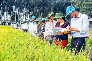 Hậu Giang ưu tiên phát triển nông nghiệp xanh, nông nghiệp thông minh