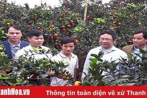 Đảng bộ huyện Ngọc Lặc lãnh đạo đẩy mạnh chuyển dịch cơ cấu cây trồng