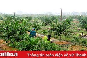 Huyện Thạch Thành xây dựng các mô hình liên kết sản xuất