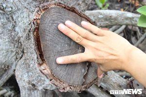 Thanh tra lại sai phạm trong dự án cắt tỉa rừng phòng hộ ở Đồng Nai
