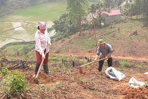 Phú Thọ: Trồng rừng giống mới, phương pháp mới, hiệu quả cao