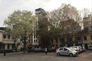 Có nên bán cây sưa 'hàng ngàn tỷ' trên đường phố?