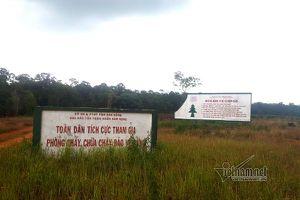 Khó tin 'cấp nhầm' sổ đỏ gần 3 hecta rừng đặc dụng