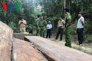 Khởi tố nhóm đối tượng có hành vi phá rừng ở Đắk Lắk