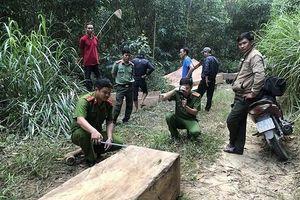 Khởi tố 3 đối tượng rủ nhau lên rừng khai thác gỗ trái phép