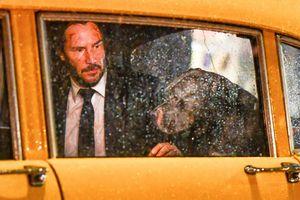 Lionsgate hé lộ hình ảnh ấm áp của John Wick và chú chó pitbull