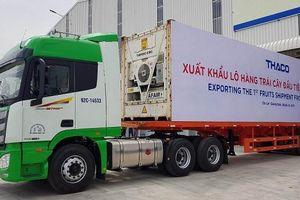 30 container chuối trị giá hơn nửa triệu 'đô' được xuất khẩu từ Quảng Nam