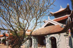 Những ngôi chùa cổ không nhận công đức, thâm nghiêm gần Hà Nội