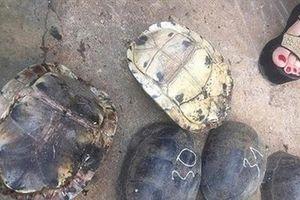 Kon Tum: Thả 86 cá thể rùa quý hiếm về Vườn Quốc gia Chư Mom Ray