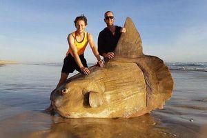 Ảnh động vật: Cá khổng lồ dạt lên bờ, sếu tán tỉnh nhau...