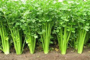 Lợi ích bất ngờ của loại rau rẻ tiền, quen thuộc với người Việt
