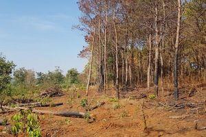 Truy tố nguyên chủ tịch xã nhận hối lộ để cho phá rừng