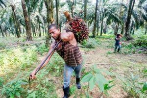 Malaysia dọa tẩy chay chiến đấu cơ châu Âu