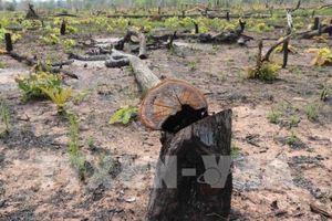 Quảng Bình: Phát hiện thêm vụ phá rừng nghiêm trọng