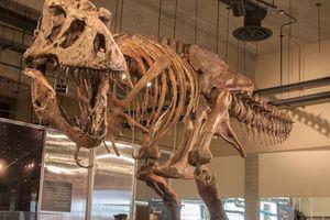 Hóa thạch 'vua' của khủng long bạo chúa được phát hiện tại Canada