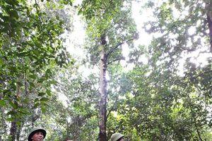 Ứng phó với tình trạng cháy rừng và nạn phá rừng ở Lạng Sơn