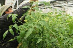 Hội ND Hà Giang: Hỗ trợ hơn 5.400 hộ hội viên, nông dân thoát nghèo