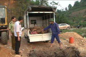 Lào Cai: Tiêu hủy hơn 500 kg cá Tầm không rõ nguồn gốc