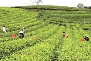 Nghệ An: Nỗ lực thúc đẩy liên kết chuỗi sản xuất gắn liền với tiêu thụ nông sản