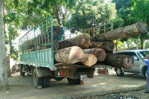 Kon Tum: Mật phục bắt quả tang 11 m3 gỗ lậu