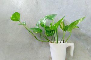 Những loại cây trồng trong nhà được NASA khuyên trồng