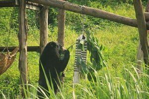 Ra mắt phim phục vụ giải cứu gấu nuôi nhốt