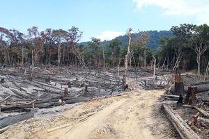 Thanh tra toàn diện Ban quản lý rừng phòng hộ Bắc Ia Grai