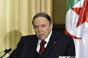Đối tác trong liên minh tranh cử kêu gọi Tổng thống Algeria từ chức