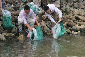 Hà Nội tổ chức thả cá tái tạo nguồn lợi thủy sản