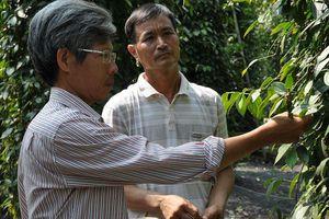 Người mang sức sống mới về vùng trồng tiêu Lâm San
