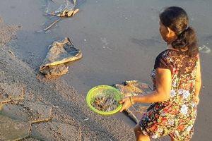 Cá chết bất thường nổi trắng ở mé sông Maspéro