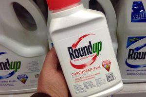 Tập đoàn Monsanto bồi thường 80 triệu USD cho nạn nhân mắc ung thư