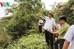 Quảng Ninh: Sẽ khởi tố đối tượng chặt phá rừng phòng hộ
