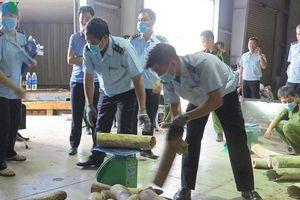 Đà Nẵng: Bắt giữ hơn 9 tấn nghi ngà voi
