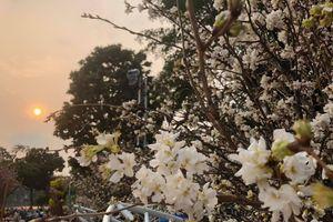 Những điểm hấp dẫn của Lễ hội hoa anh đào Nhật Bản - Hà Nội 2019
