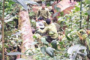 Bắt hai người Lào sang Việt Nam khai thác gỗ trái phép