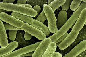 Nghiên cứu khoa học nổi bật: Vi khuẩn tạo ra dòng điện