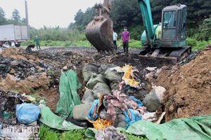Phát hiện, tiêu hủy hơn 1,6 tấn nầm lợn nhập lậu