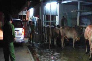 Bắt quả tang 2 đối tượng bơm nước vào bò để tăng trọng lượng