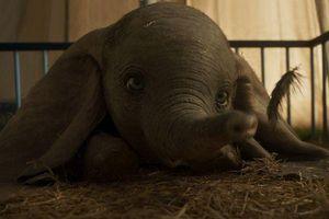 'Dumbo - Chú voi biết bay': Thước phim sống động kiến tạo sự phi thường từ định kiến