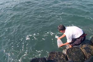 Phú Yên: Thả 600.000 con giống nhằm tái tạo nguồn thủy sản
