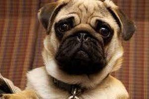 Chó Bugs phát hoảng khi trên tivi xuất hiện nhân vật y chang mình