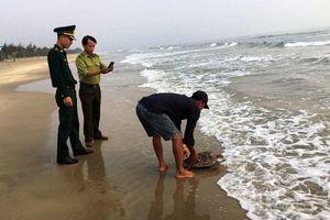 Thả cá thể rùa biển nằm trong Sách đỏ Việt Nam về tự nhiên