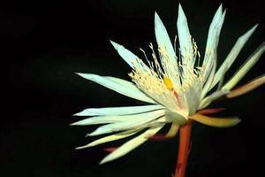 Top 8 loài hoa đắt nhất hành tinh, giá trăm tỷ đồng